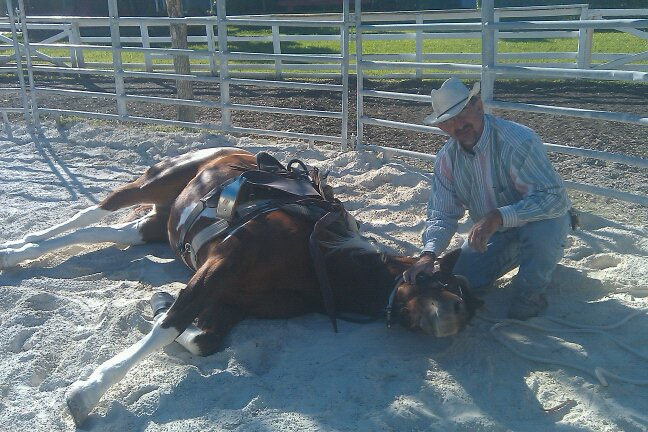 Client's mare Stormy learns to lay down.